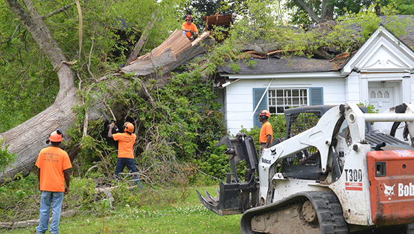 Image result for Tree Service Company